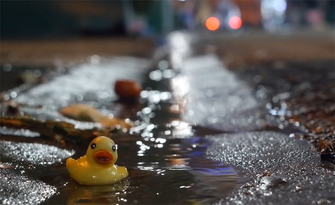Ducks, Urban Legend